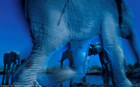 an elephant (by Geg du Toit, wildlife photographer)